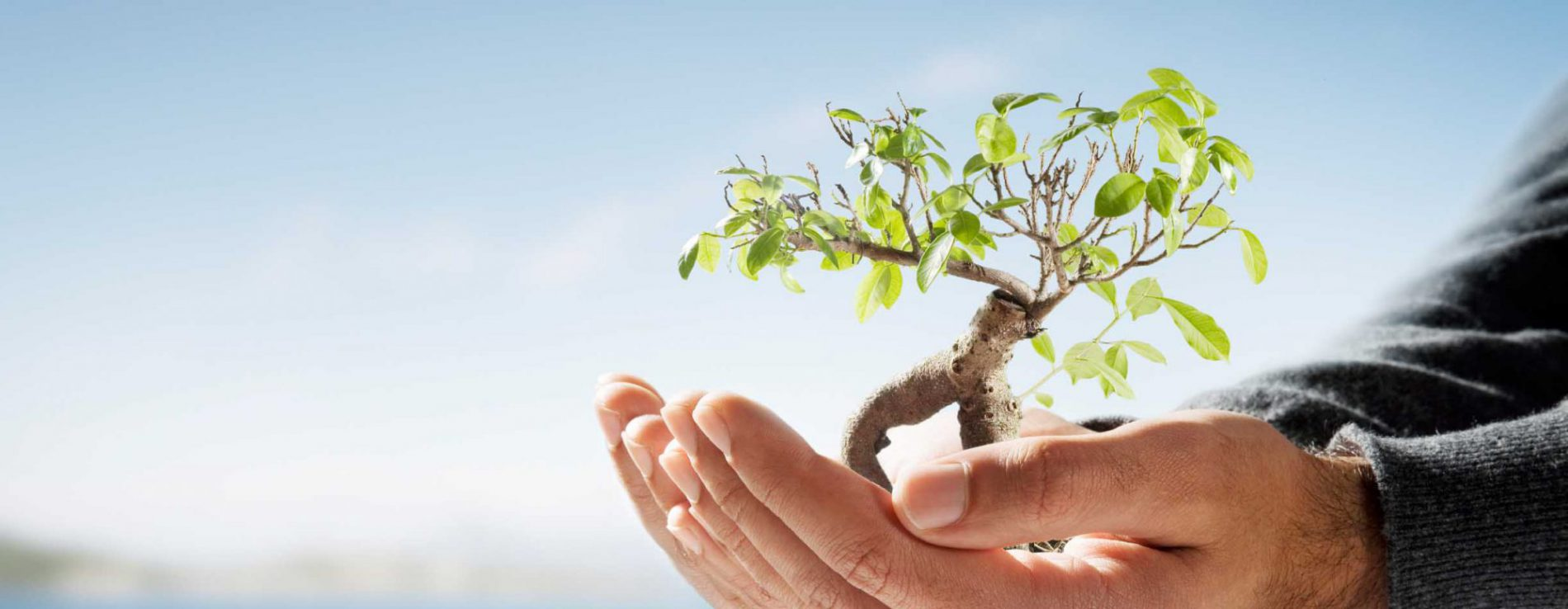 tree-in-hand-banner-e1463574748186